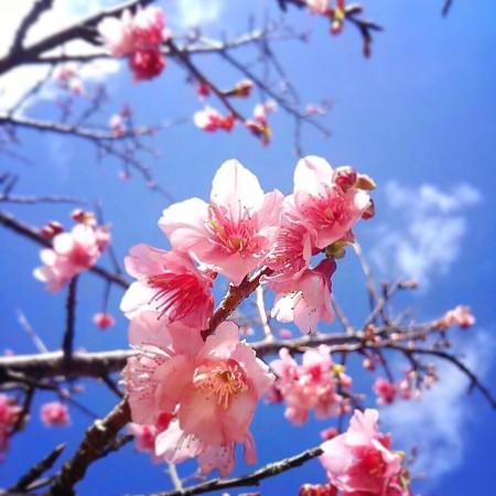 桜 さくら ハンドメイド アクセサリー ブレスレット ハンドメイドアクセサリー ククルロコ